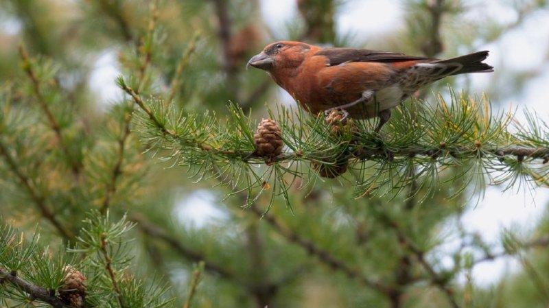 Des oiseaux sous pression