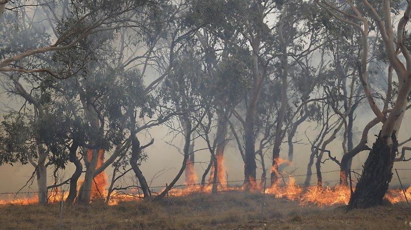 Les feux de forêts australiens ont détruit 115'000 kilomètres carrés en 2019 et 2020 (archives).