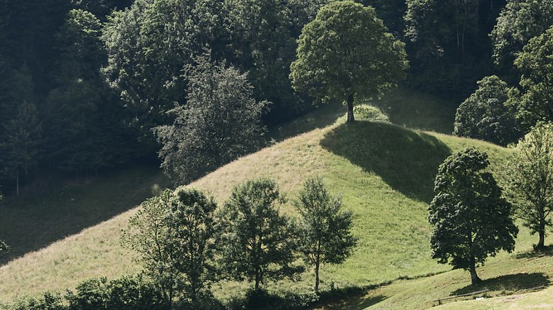 Climat: après la sécheresse de l'été, les forêts suisses ont été durement éprouvées