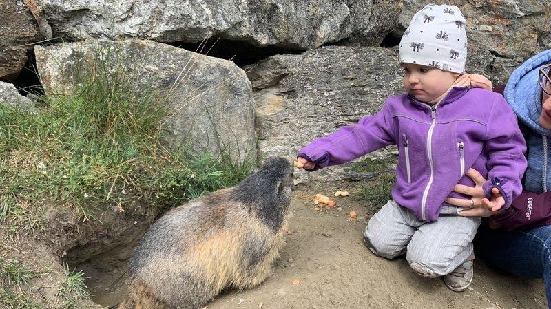 A Saas-Fee, marmottes et hôtes cassent la croûte