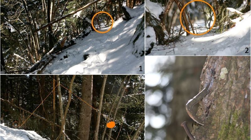 Une étude dénonce le braconnage de lynx en Valais