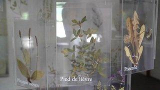 Musée de Bagnes: raclette, bien plus qu'un met