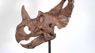 Un cancer a été diagnostiqué pour la première fois chez un dinosaure
