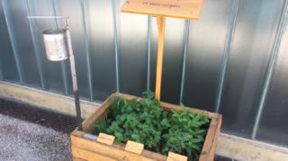 Sion: des jardinières équipées de cendriers pour réduire le nombre de mégots