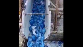 Des milliers de méduses obstruent une centrale électrique en Israël