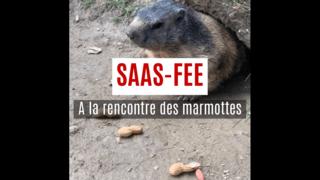 Saas-Fee: rencontre entre l'homme et la marmotte