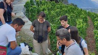 A Martigny, on déguste et on s'instruit dans le vignoble en pierres sèches