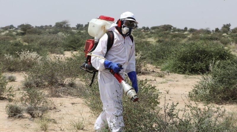 Pesticides: l'Europe exporte des milliers de tonnes de produits interdits