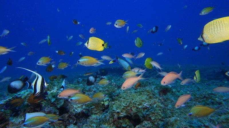 Environnement: depuis 2010, le monde a raté tous ses objectifs de préservation de la biodiversité