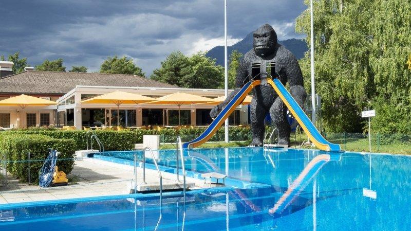 Le mythique gorille du Botza va disparaître.