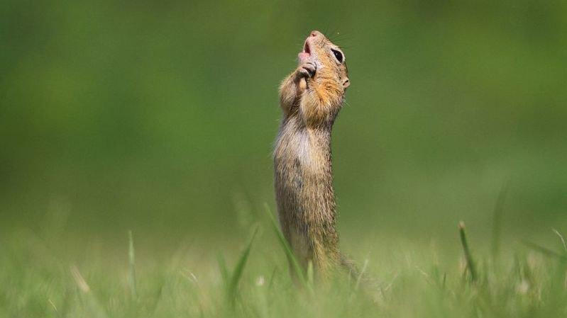 Concours photos: les animaux les plus drôles au secours de la biodiversité