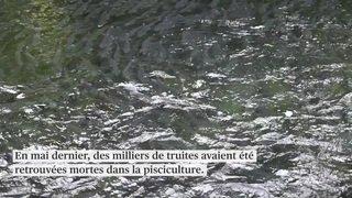 Poissons morts en augmentation au lac Bleu: plainte pénale déposée