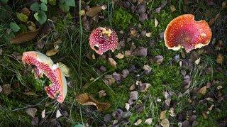 Insolite: grâce à un cercueil de champignons, le commun des mortels peut devenir du compost