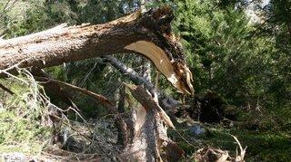 Forêts de protection: le Haut-Valais menacé, mais le canton rassure