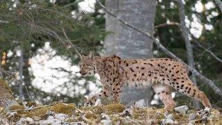 Nouvelle salve contre le service de la chasse